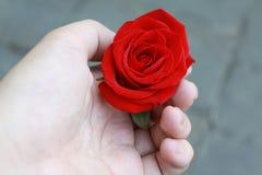 Palma da rosa do vermelho disponível Fotos de Stock Royalty Free