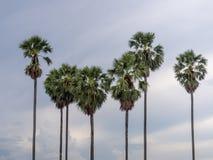 Palma da zucchero in Tailandia Immagine Stock Libera da Diritti