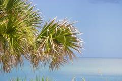 Palma dalla spiaggia Fotografia Stock Libera da Diritti