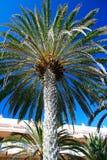 Palma davanti all'hotel nell'isola di Tenerife Fotografia Stock Libera da Diritti