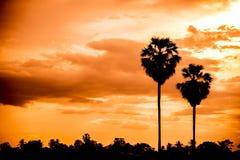 Palma de azúcar con la silueta de la salida del sol Fotos de archivo