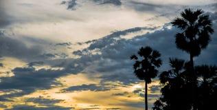 Palma de azúcar con la silueta de la salida del sol Imagenes de archivo