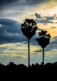 Palma de azúcar con la silueta de la salida del sol Imagen de archivo libre de regalías