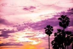 Palma de azúcar con la silueta de la salida del sol Fotografía de archivo