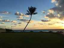 Palma de Cancun Imagem de Stock