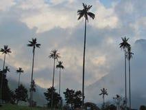Palma de cera grande no cocora do vale de Salento fotografia de stock