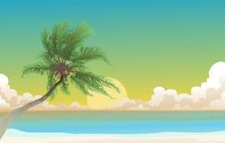 Palma de coco Fotografia de Stock