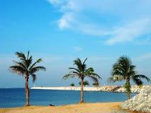 Palma de coco Imagens de Stock