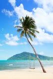 Palma de coco con los oscilaciones en la playa Fotos de archivo libres de regalías