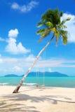 Palma de coco con los oscilaciones en la playa Foto de archivo libre de regalías