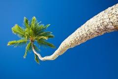 Palma de coco contra el cielo azul con el copyspace Fotos de archivo libres de regalías