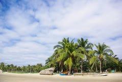Palma de coco de la bahía de Sanya Imagen de archivo