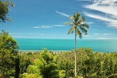 Palma de coco em Tailândia Fotos de Stock Royalty Free