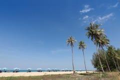 Palma de coco en el fondo del cielo azul fotos de archivo libres de regalías