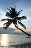 Palma de coco en el mar Fotos de archivo