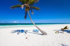 Palma de coco en la playa Foto de archivo libre de regalías