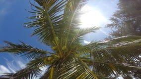 Palma de coco en la playa almacen de metraje de vídeo