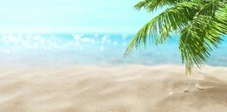 Palma de coco en la playa Mar tropical imagen de archivo libre de regalías