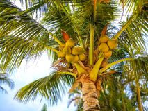 Palma de coco en la playa en Tailand fotografía de archivo