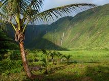 Palma de coco en paraíso Fotos de archivo libres de regalías