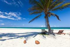 Palma de coco na praia Foto de Stock