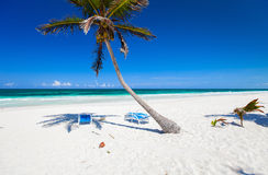 Palma de coco na praia Foto de Stock Royalty Free