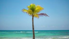 A palma de coco só cresce em uma praia tropical Água de turquesa do mar das caraíbas Maya México de Riviera vídeos de arquivo