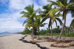 Palma de coco Sanya Fotografía de archivo