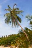 Palma de coco tropical elevada na praia ensolarada imagens de stock royalty free