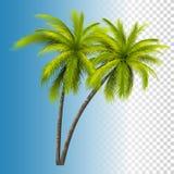 Palma de coco verde Fotos de Stock Royalty Free