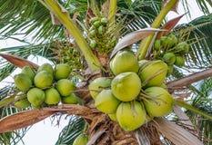 Palma de cocos imagen de archivo