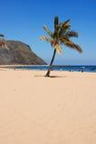 Palma de la playa Foto de archivo