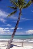 Palma de la playa del paraíso Foto de archivo libre de regalías