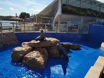 Palma DE Mallorca royalty-vrije stock foto