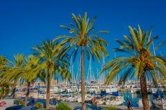 PALMA DE MALLORCA SPANIEN - AUGUSTI 18 2017: Härlig hamnsikt med vityachter och några palmträd, i Palma de Fotografering för Bildbyråer