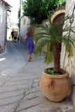 Palma de Phoenix, Chipre Imágenes de archivo libres de regalías