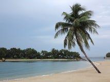 Palma de Poconut Fotografia de Stock