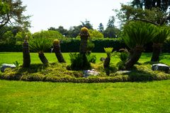 Palma de sagú en jardín japonés foto de archivo