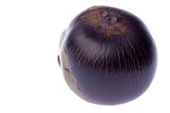 Palma de toddy fresca aislada Fotografía de archivo libre de regalías