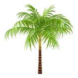 Palma decorativa Immagine Stock Libera da Diritti