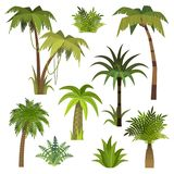 Palma del fumetto Palme della giungla con le foglie verdi, foresta esotica dell'Hawai, palme della spiaggia della noce di cocco d illustrazione di stock