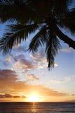 Palma del océano en Maui en la puesta del sol. foto de archivo
