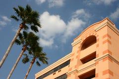 Palma del oeste Fotografía de archivo