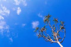 Palma del Pandanus que crece en la playa del mar Silueta en fondo del cielo Foto de archivo