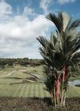 Palma del rossetto che trascura un campo da golf fotografia stock