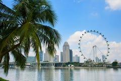Palma dell'aletta di filatoio e di Singapore Fotografia Stock