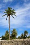 Palma della città di Lanzarote Fotografia Stock Libera da Diritti