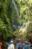 PALMA DELLA LA DEL `, ISOLE CANARIE, SPAGNA - 13 AGOSTO 2017: la gente che ammira la cascata della foresta di Los Tilos, riserva  immagine stock