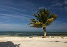 Palma della noce di cocco della spiaggia Immagini Stock Libere da Diritti