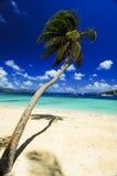 Palma della spiaggia Fotografie Stock